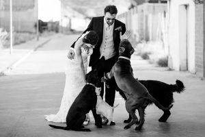 wedding documentary photographer in Oropesa, Spain